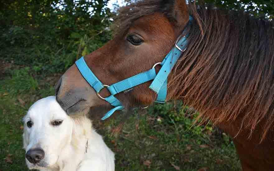 les dangers du fumier pour le chien