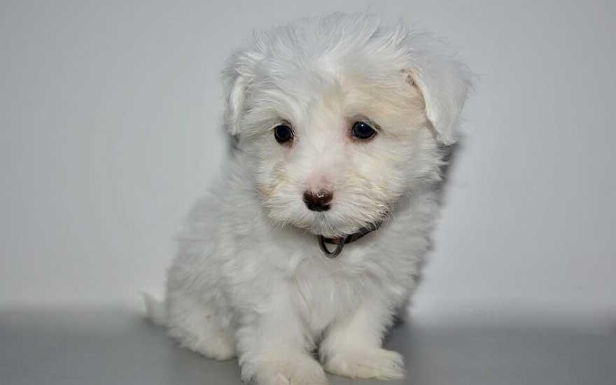 Chien De Garde Dressé A Vendre - 10 astuces à savoir - Pro - Blog chien