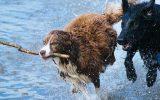 amliorer la vie de son chien