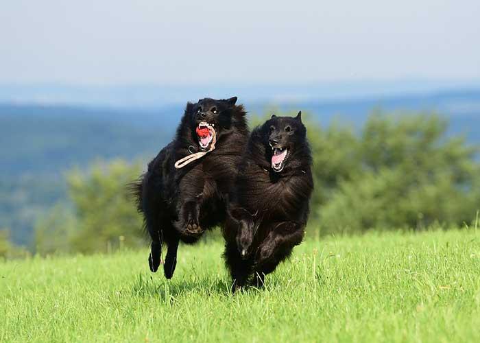 avantages de jouer avec son chien