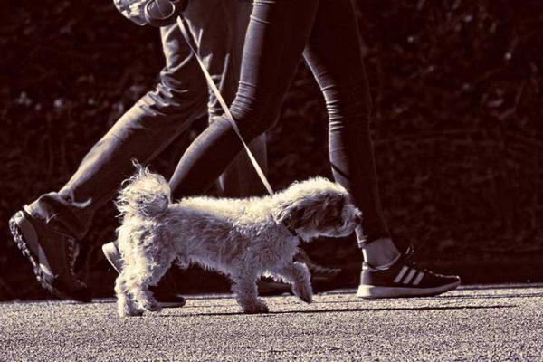 importance de promener son chien